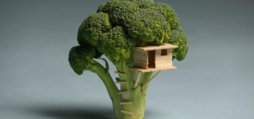 House on Tree - Random Picture
