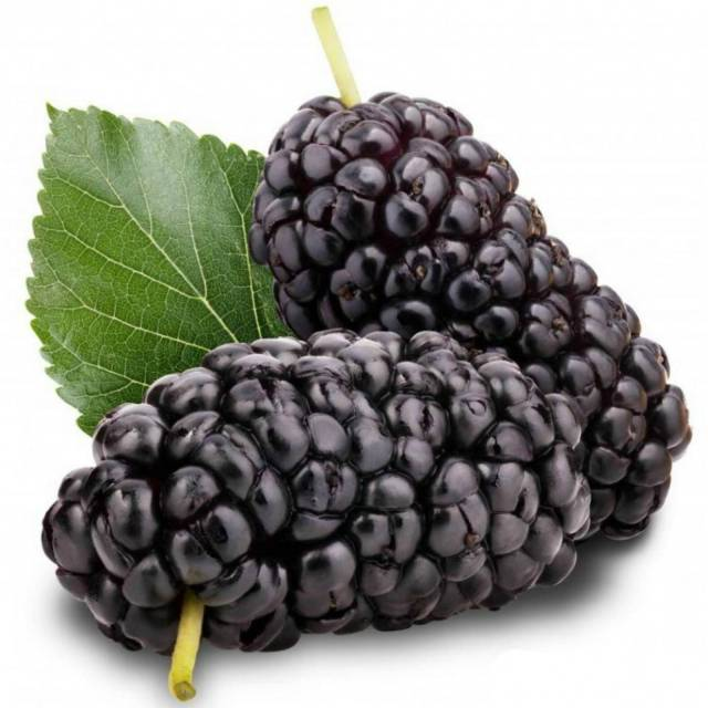 side effects of mulberry