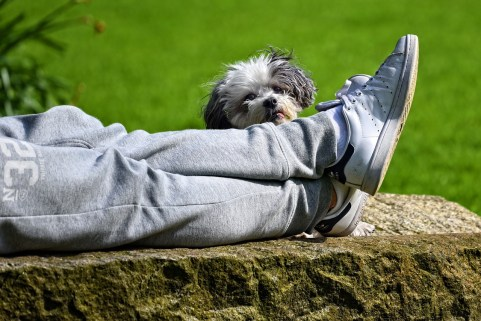 lazy guy and his dog