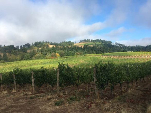 Willamette Wine Country