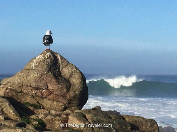 Seagull Bird Rock