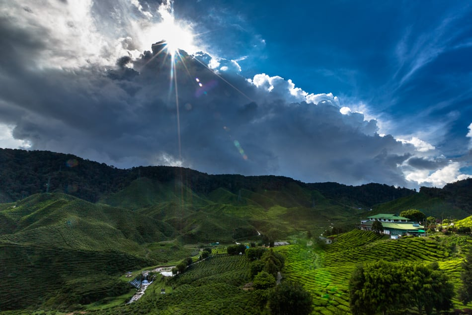The afternoon sun over the Bharat Tea Plantation.
