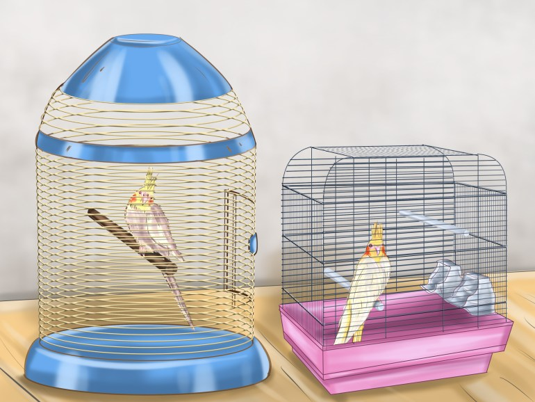 Flight cages for small birds review