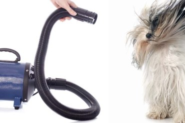 Doggy hair dryer