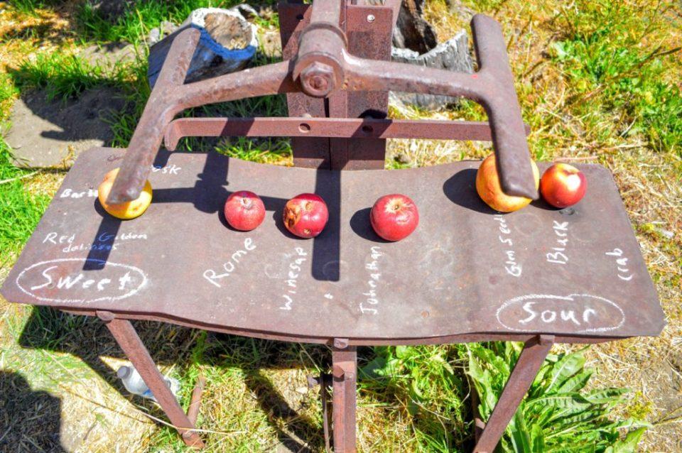 apple-selection