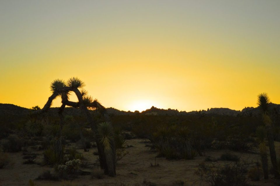 joshua-tree-sunset-5