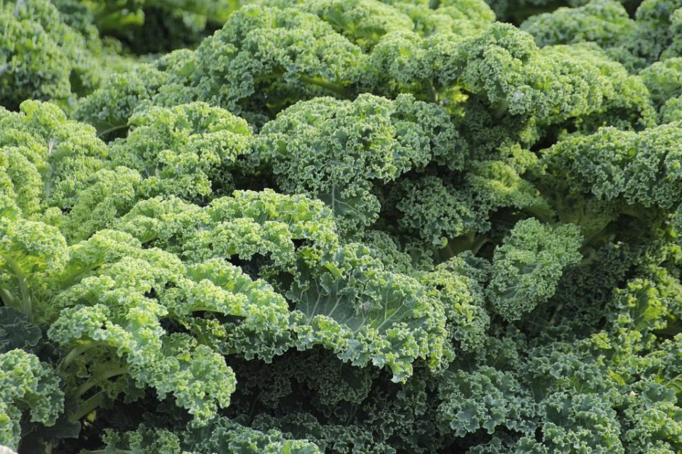 Green Vegetables With Antioxidants