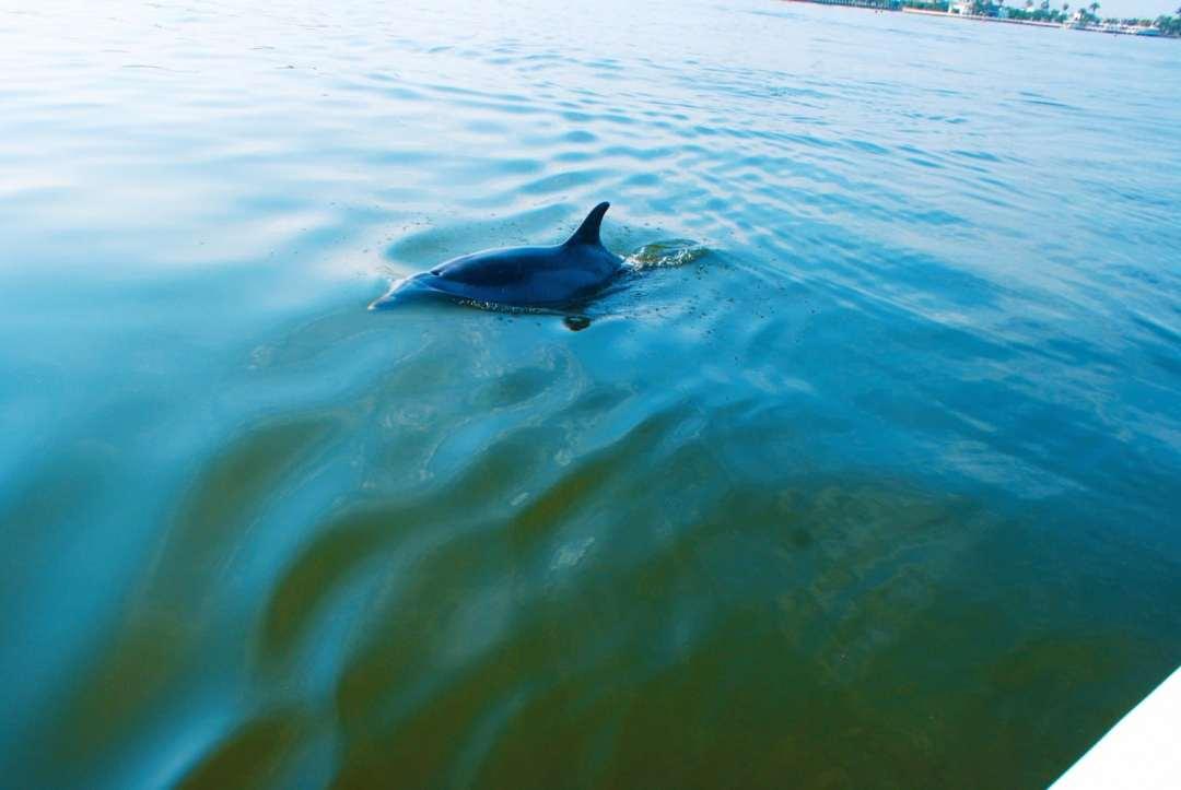 Dolphin Spotting in Paracas Peru