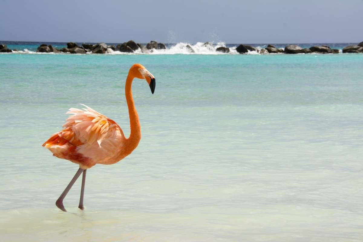 Aruba is one of the most stunning islands in the Caribbean. Read our full guide now.