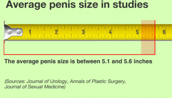 how long is average penis