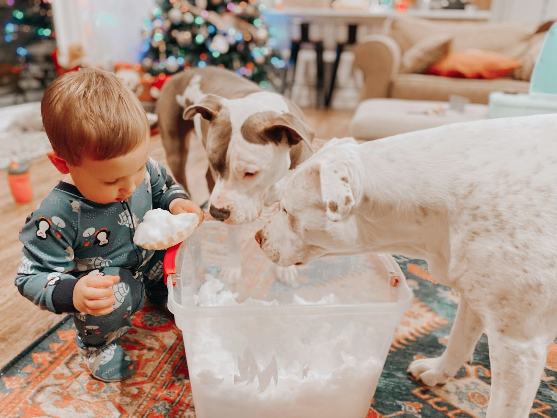 Toddler and Dogs playing with Snow bucket