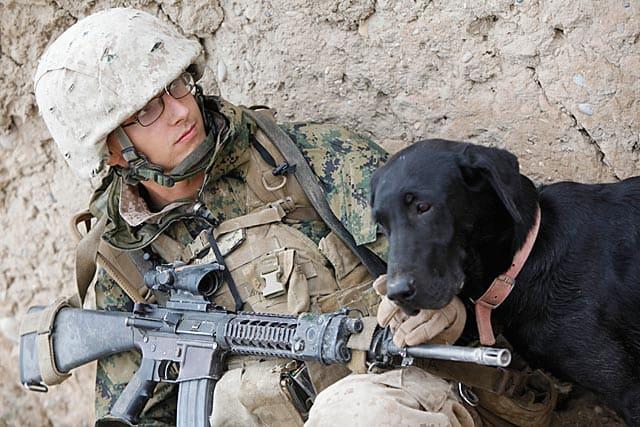 Soldeir With Dog In Desert