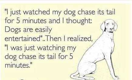 I-Just-Watched-My-Dog-Inspirational-Life-Quotes