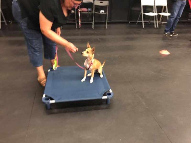 Mississauga Puppy Training