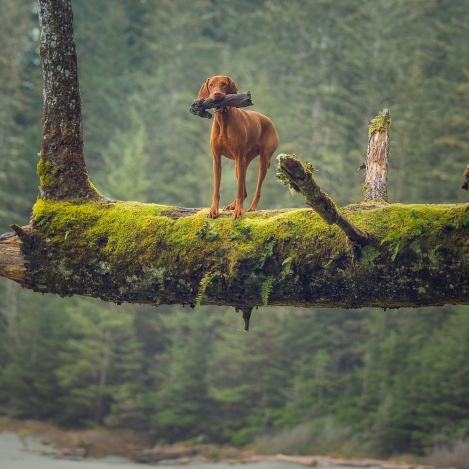 tree climbing dog