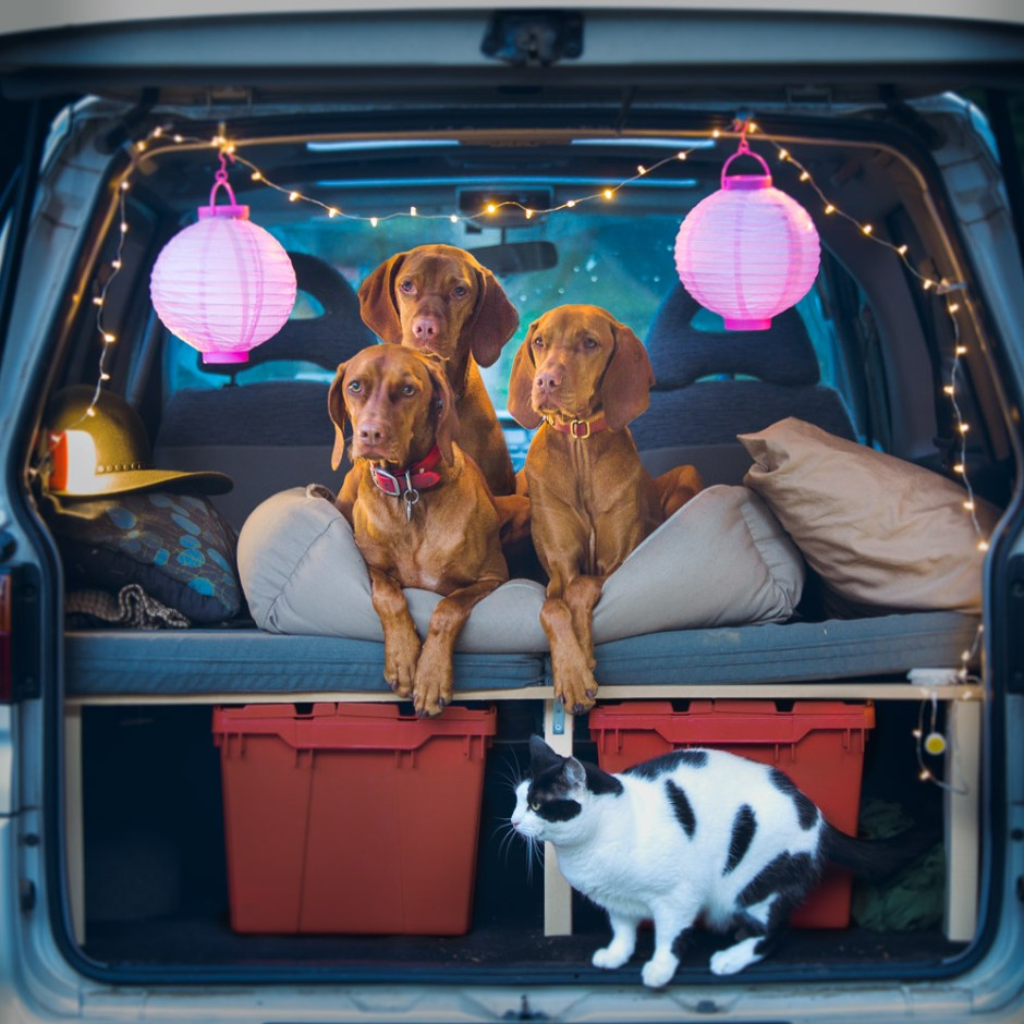 three dogs and a cat in a living and camping in a camper van