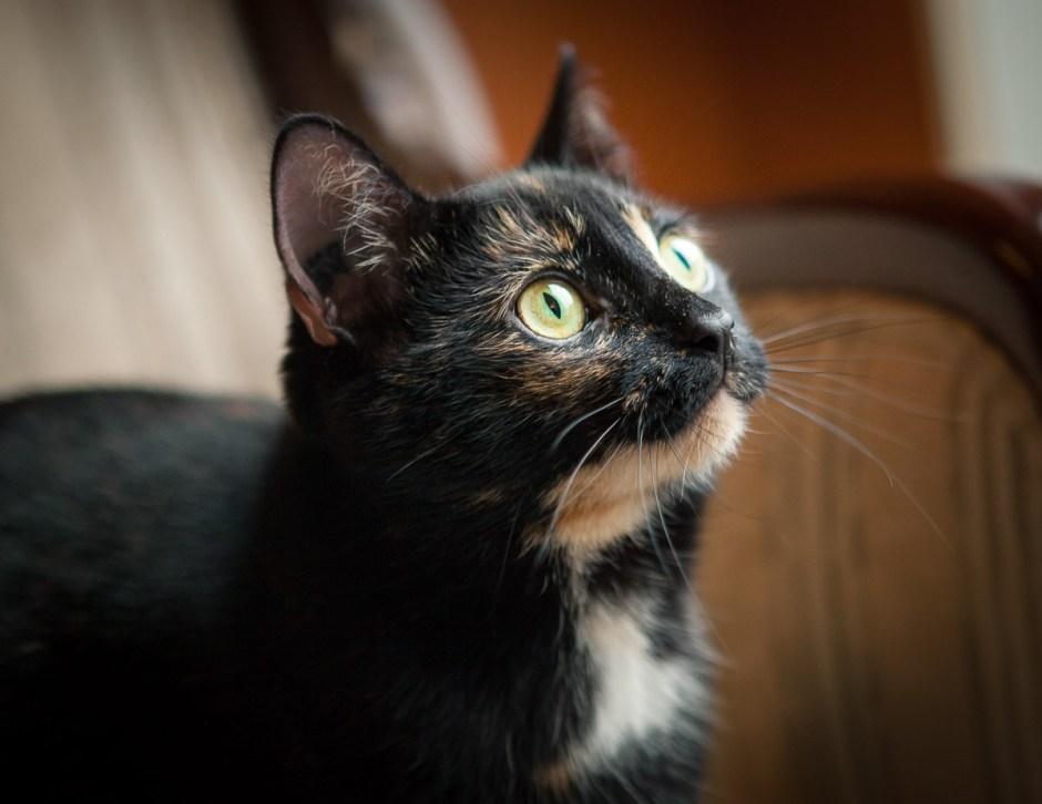cat photography window light green eyes