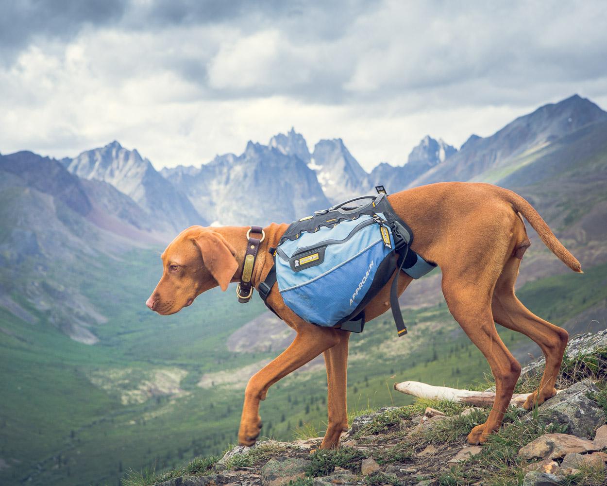 Tombstone, grizzly ridge lake trail, dog hiking backpack