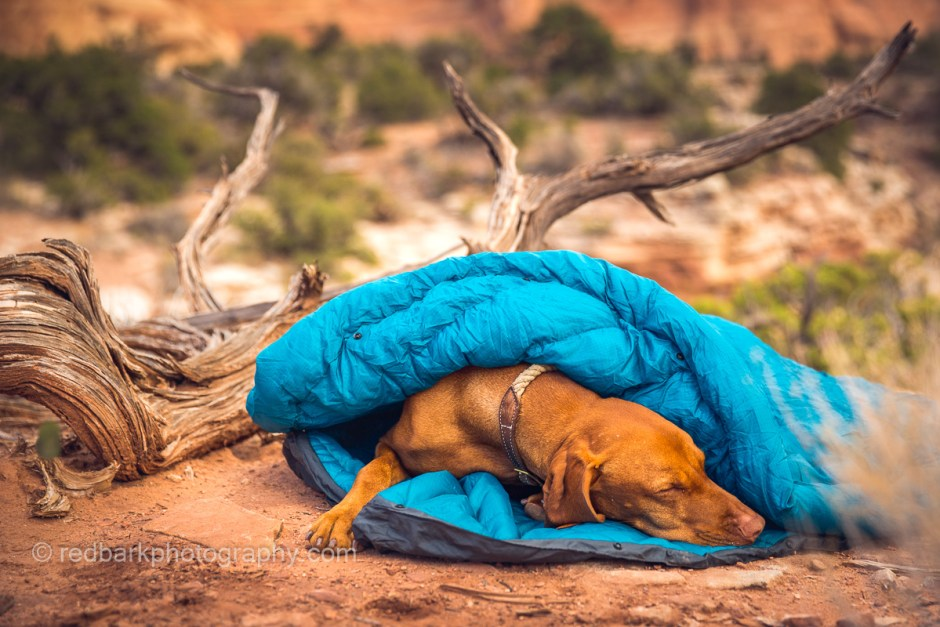 Whyld river sleeping bag made for dogs, super flexible and warm for winter