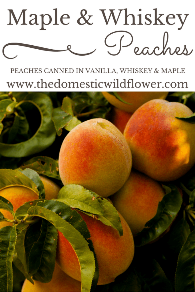 Maple Whiskey Peaches | The Domestic Wildflower click to read this super easy beginner's canning recipe from The Domestic Wildflower! These peaches are to die for on cheesecake, waffles, in a crisp or cobbler, or straight out of the jar!