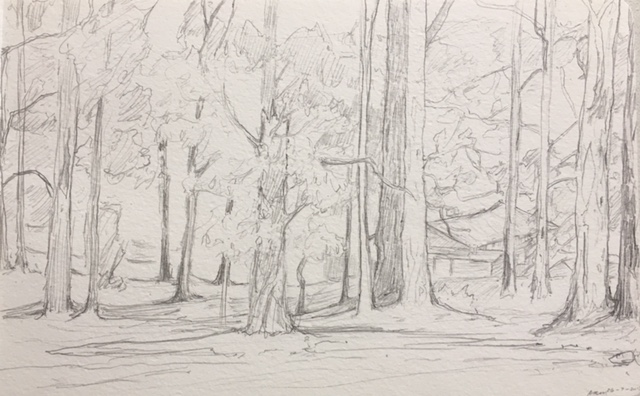 Harvey Mullen, Donnelly Forest Sketch