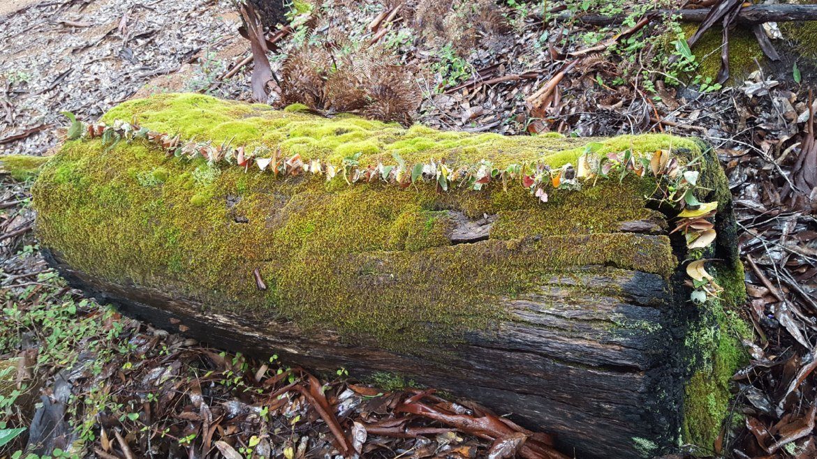 Kate Campbell-Pope, forest garland in-situ, mossy log