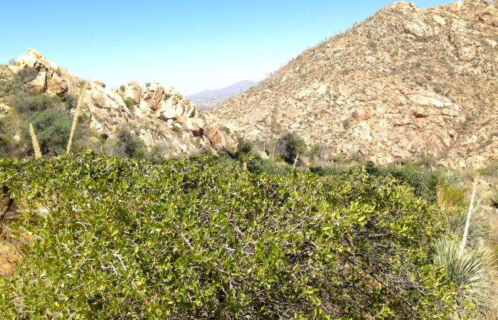 Traveling to…Catalina State Park {Romero Canyon Pools}