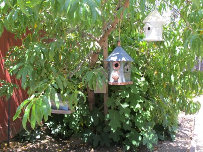 As Isabella sees it, until we put bird seed in the feeder, we have three birdhouses and a zero bird population under the peach tree.