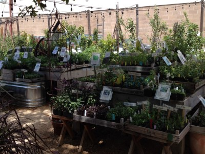 Vegetable plants are housed in the top right of the nursery under strings of light.