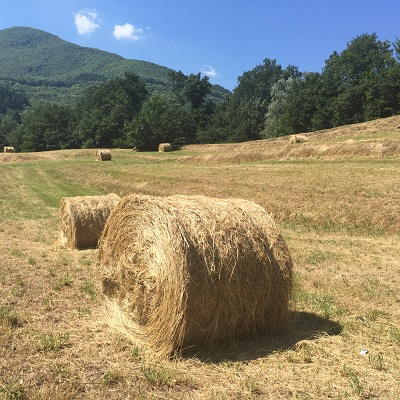 On our way to Castelnuovo di Garfagnana, bales of hay in the fields of Tuscany.