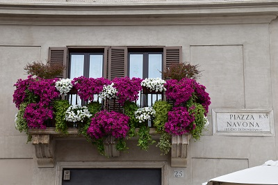 An explosion of colorful flowers on a balcony along Piazza Navona - a common scene in Roma.