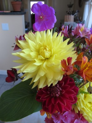The dahlias were big and beautiful.