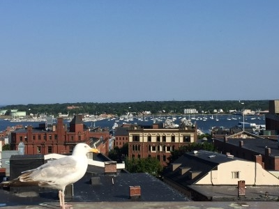 Penthouse deck views from The Press Hotel at 119 Exchange Street. Formerly headquarters of The Press Herald newspaper, it's now a boutique hotel with a very distinct journalism aesthetic. No, the seagull did not photo bomb me; he just wouldn't get out of the way.