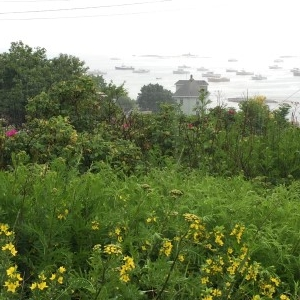 A little fog and rain, grassy hills, and a view of the bay.