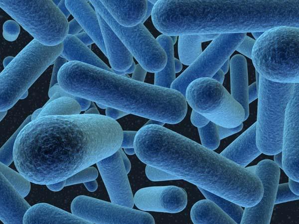 Primeira fotogarfia publicada no artigo Michel Chapoutier ataca novamente: são as bactérias e não os métodos de vinificação que trazem complexidade ao vinho!