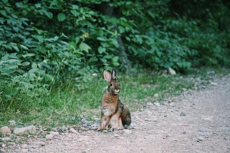 Mammal (Victor Szymanski/The East)
