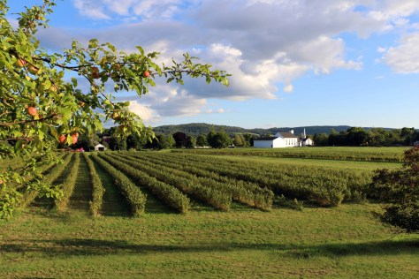 Happy Wines Vineyard (Diane McMillan)