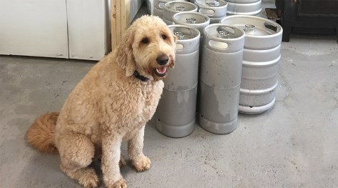 Think Brewing Brewery Pupper (Denise MacLean)