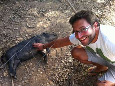 George the permaculture pig
