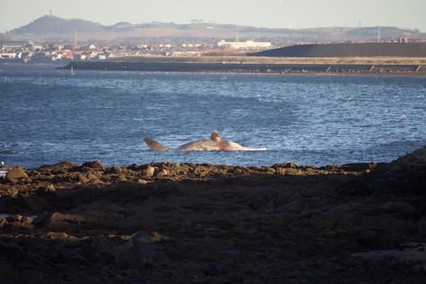 Whale at Joppa 1