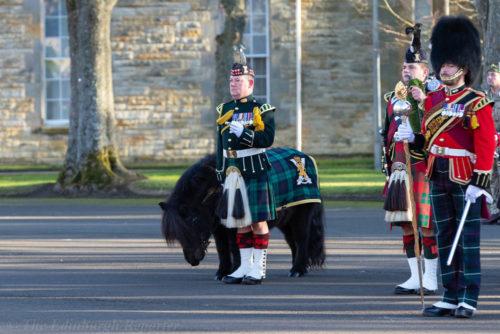 Regimental mascot Shetland pony