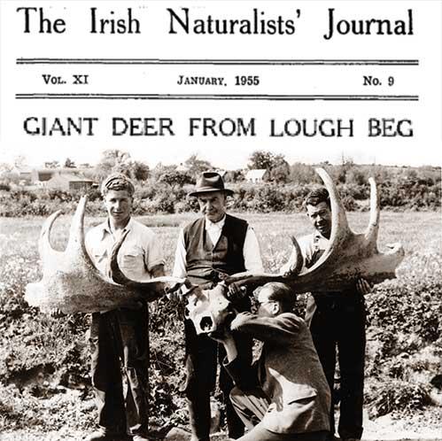 The Elk Bistro Antlers