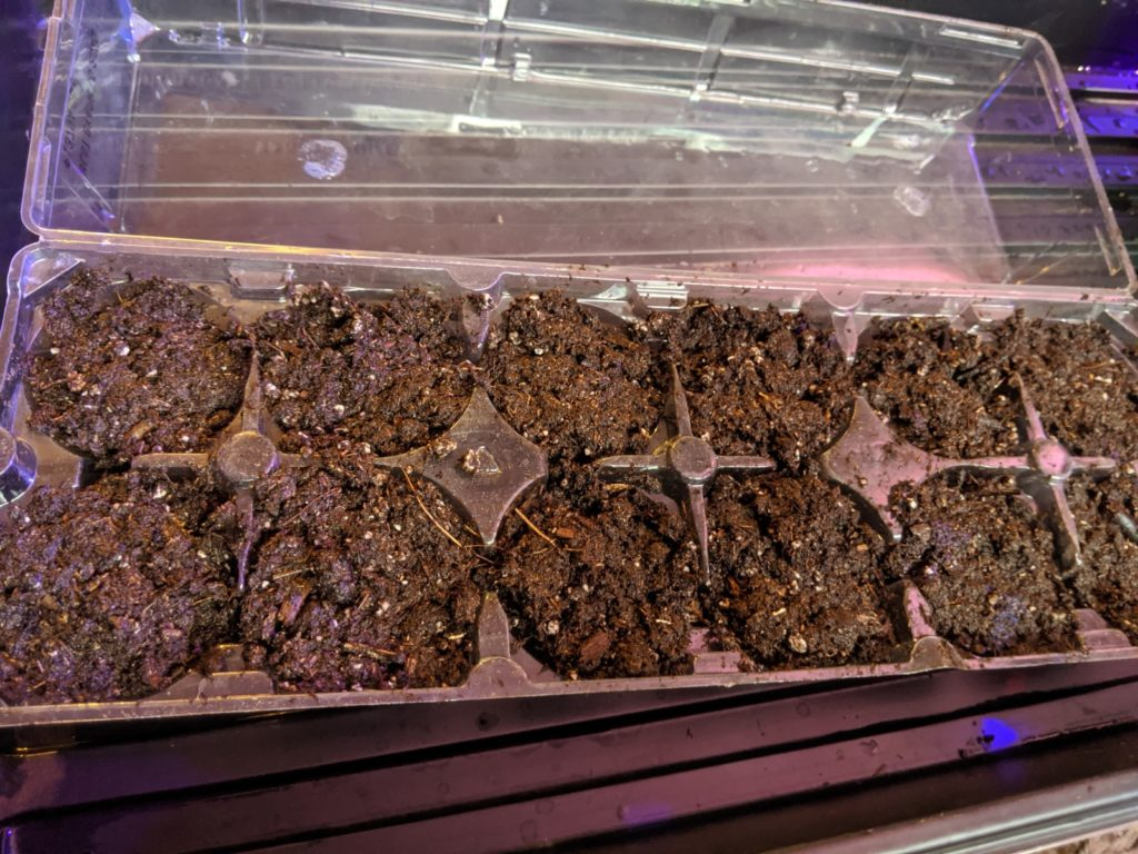 egg carton planter with seed starting mix