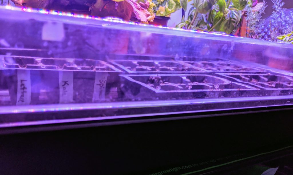 seed tray with inserts