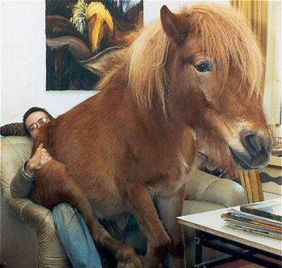 https://i1.wp.com/www.theequinest.com/images/horse-sit.jpg