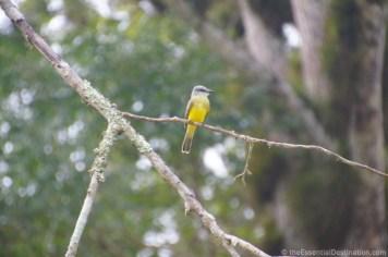 Tikal wildlife