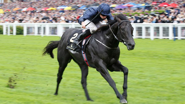 Star Colt To Be Set For The Everest