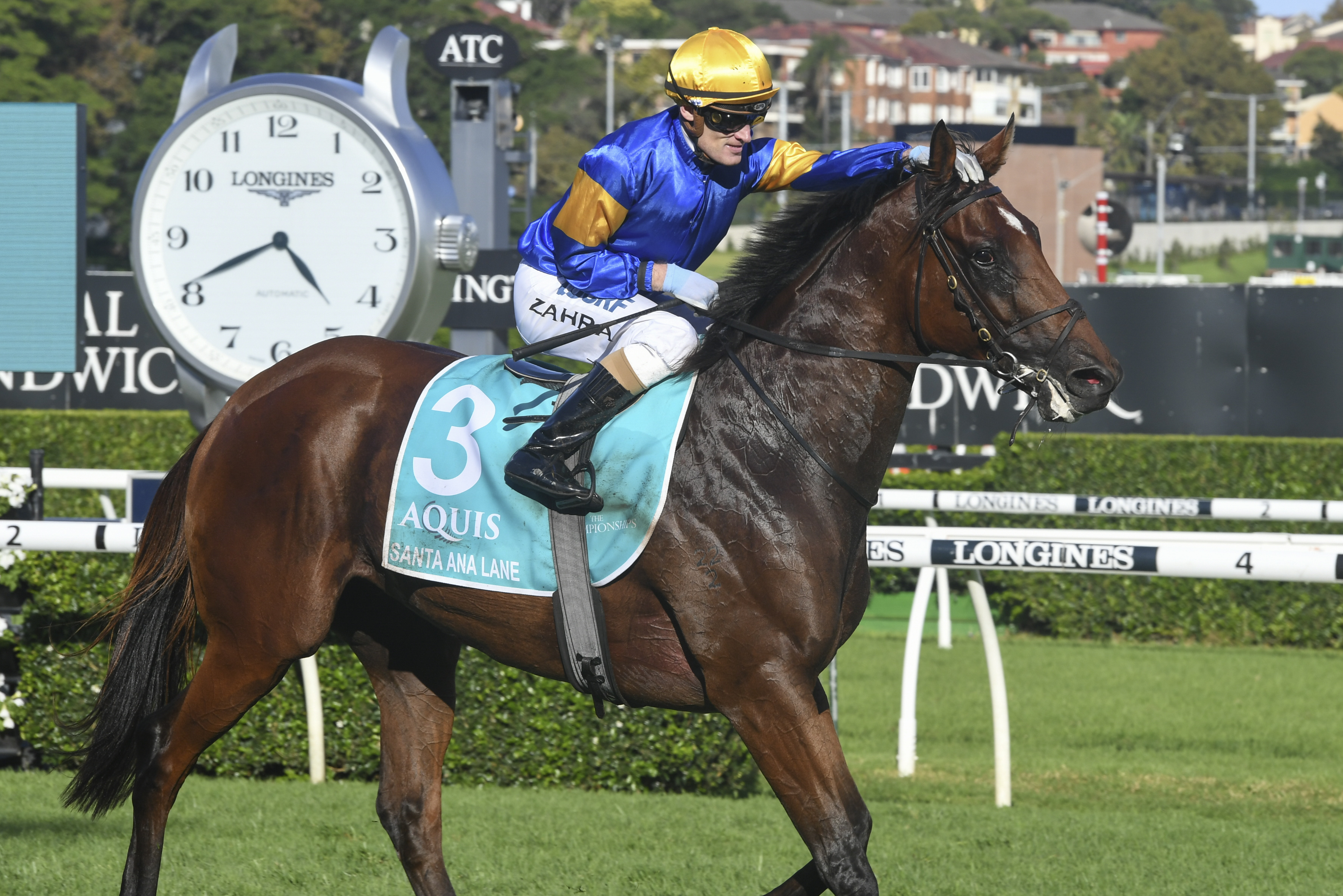 Santa Delivers Another Strong Everest Pointer