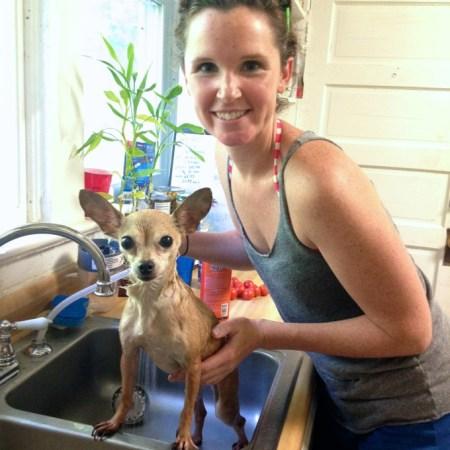 This stray Chihuahua gets a flea bath | www.mybottomlessboyfriend.com