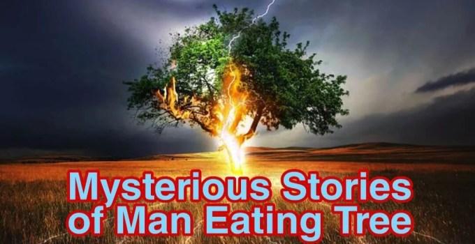 Mysterious stories of man eating trees   इंसान को खाने वाले पेड़ो की अनसुनी कहानी